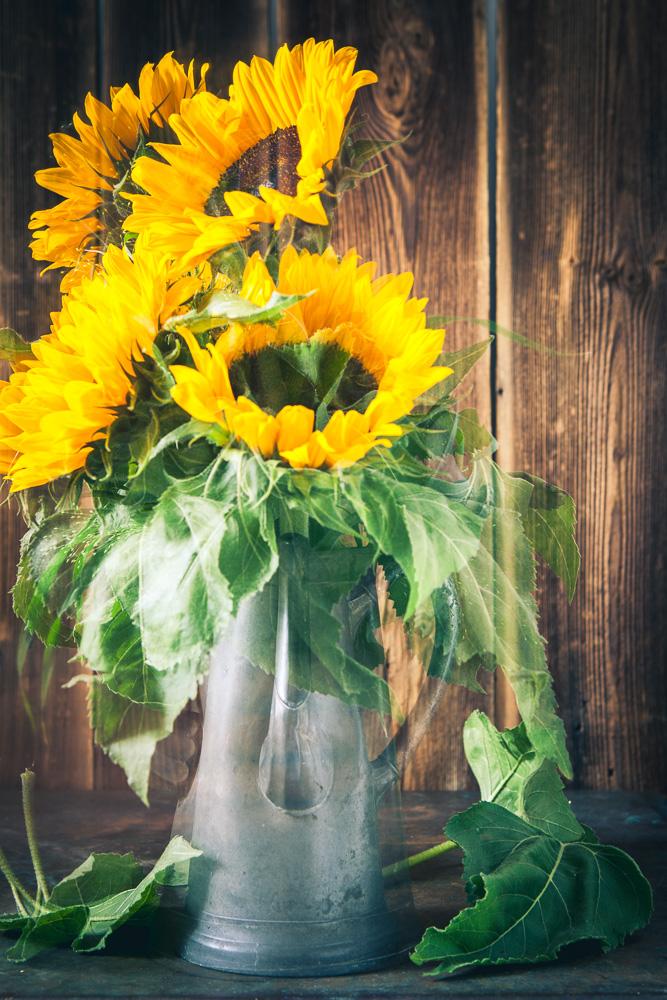 Sonnenblumen_in_antiker_Zinnkanne